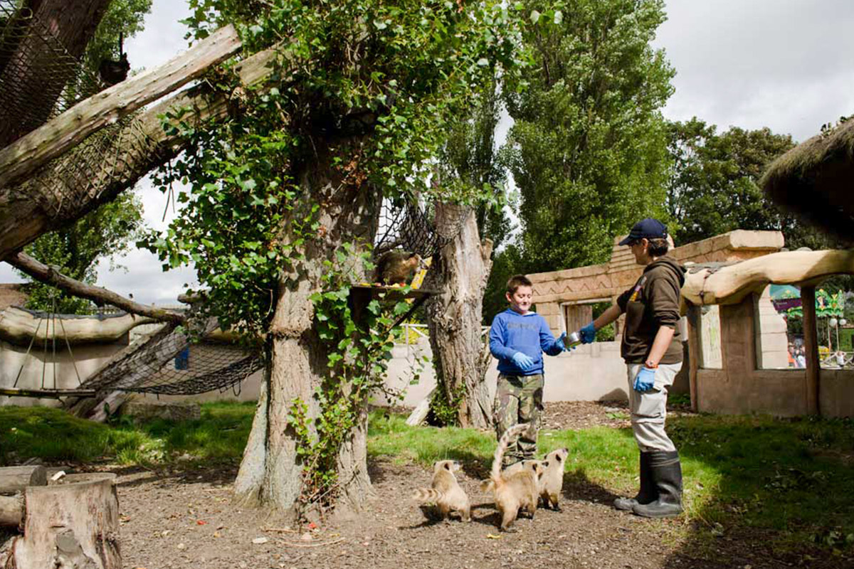 Be a Zoo Keeper for the Day at Flamingo Land Zoo