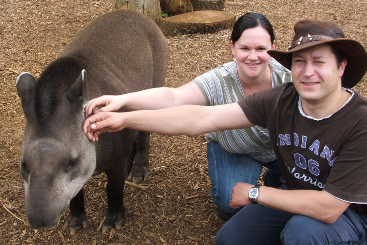 Tickle a Tapir for Two