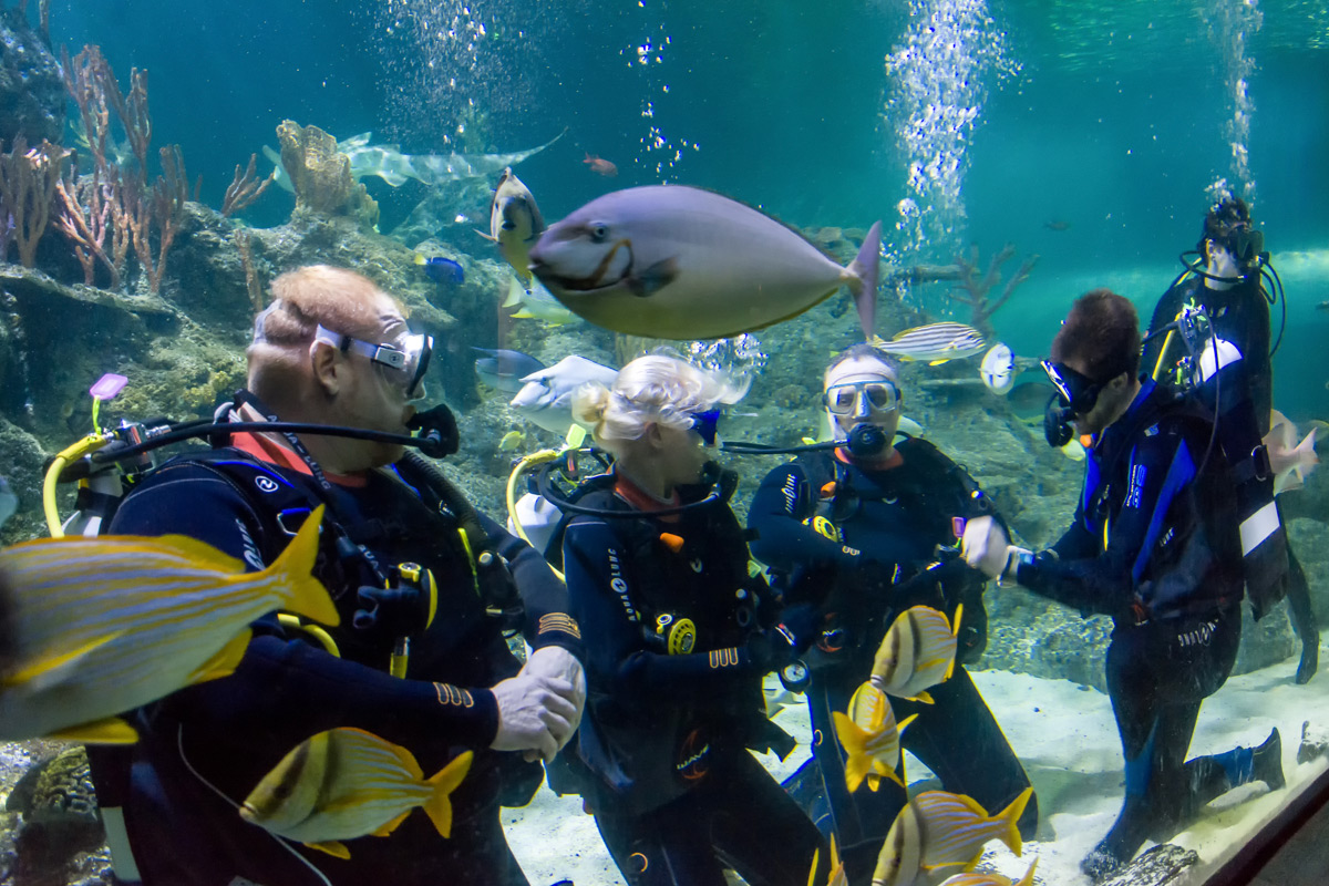 Weekday Dive with Sharks at Skegness Aquarium