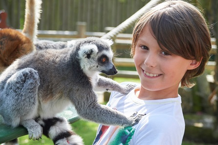 Animal Encounter at Drusillas Park
