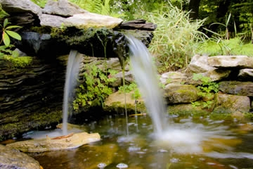 Gardens Tour & Afternoon Tea for Two at Paradise Wildlife Park
