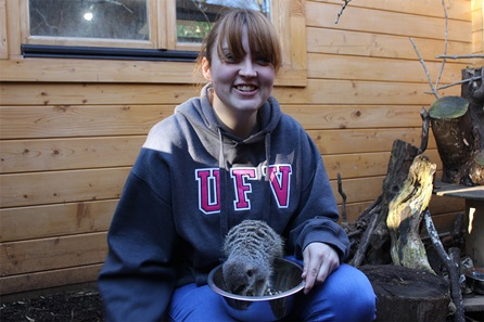 Meet the Meekats at Hemsley Conservation Centre