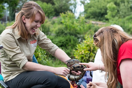 Reptile and Bug Experience at Dartmoor Zoo