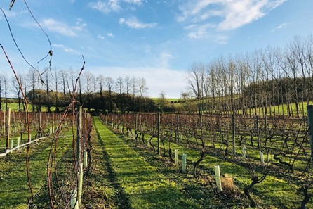 Tour and Tasting with Lunch for Two at Chilford Hall Vineyard