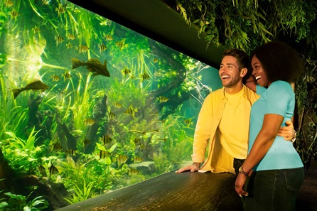Visit to SEA LIFE London Aquarium for Two Adults