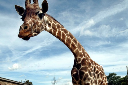 Visit to ZSL London Zoo - Autumn/Winter 2016 - Two Adults