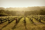 Bluebell Vineyard Estates Tour with Cheese and Wine Tasting