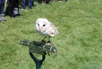 Falconry Taster for Two
