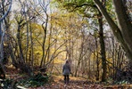 Forest Bathing Experience