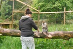 Keeper for the Day with Lunch for Two at Dartmoor Zoo