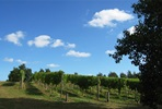 Tour and Tasting For Two at Chilford Hall Vineyard