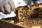 Urban Beekeeping and Honey Craft Beer Tasting