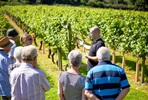 Vineyard Tour, Wine Tasting and Three Course Dinner with Fizz for Two at Chapel Down Winery