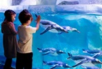 Visit to SEA LIFE London Aquarium for Two Adults and Two Children