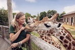 Visit to ZSL London Zoo and Afternoon Tea with Prosecco at Gordon Ramsay's York & Albany for Two