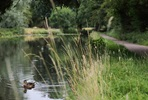 Woodland Trail Segway Experience for Two at The Grove 5* Country Retreat